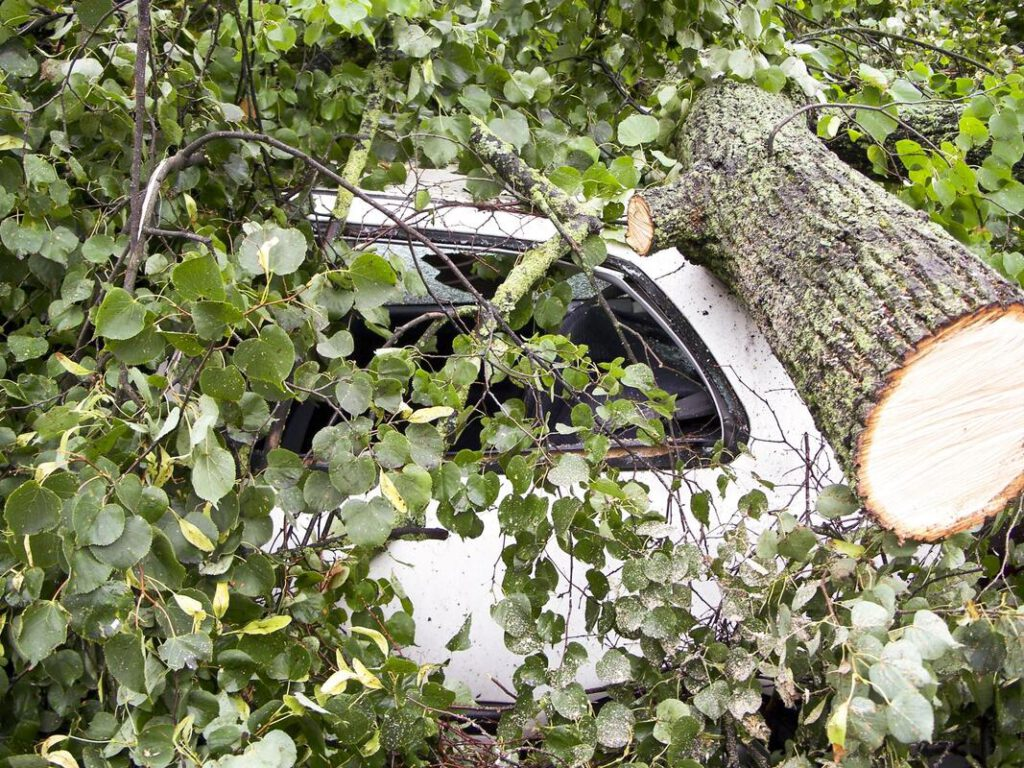 bedford-tree-service-company-storm-damage-clean-up-1_orig