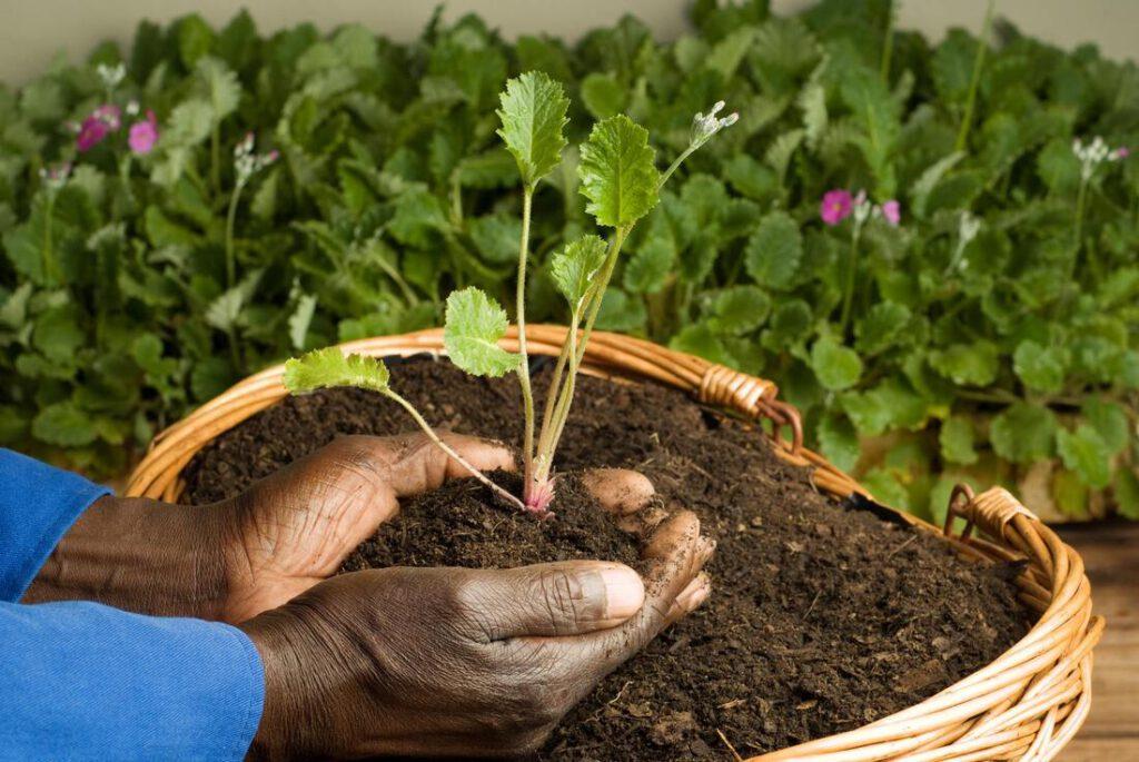 bedford-tree-service-company-tree-planting-moving-1_orig
