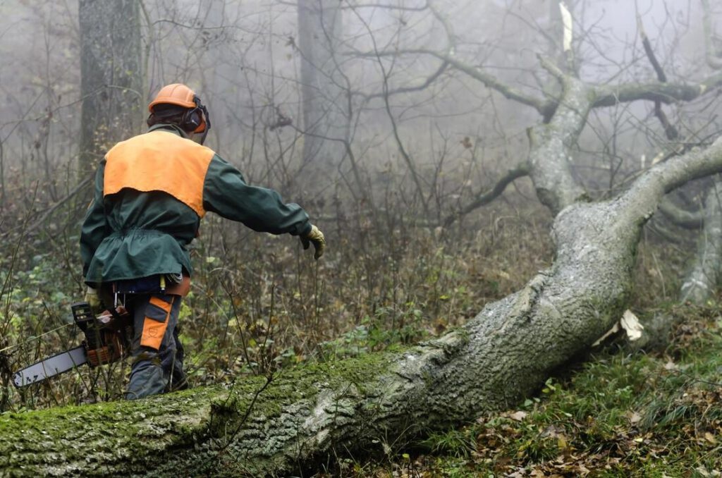 bedford-tree-service-company-tree-removal-disposal-1_orig