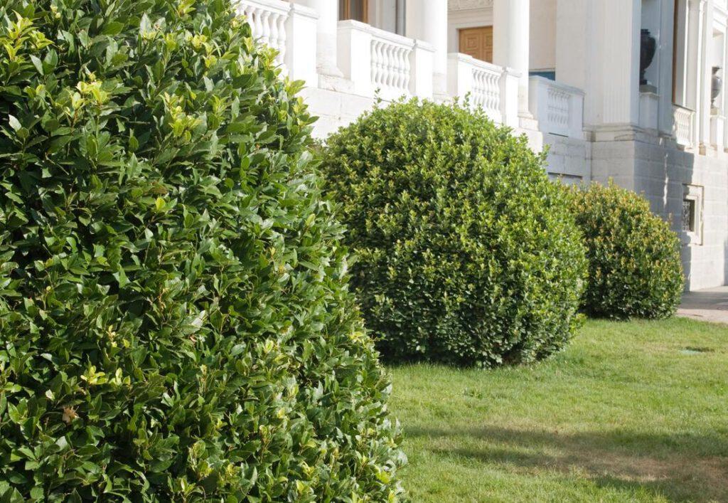 bedford-tree-service-company-tree-shrub-trimming-1_orig